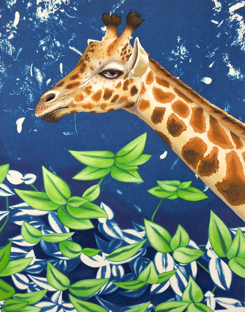 nat-12 Giraffe. 2014, 35 x 28 cm, cyanotype print and gouache on paper.