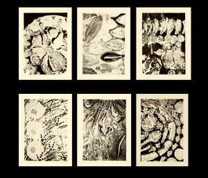 Food Prints. 1997, 66 x 54 cm each, lithographs, edition of 15.